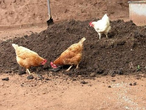 Татищевскую птицефабрику «Возрождение-1» уличили в загрязнении сельхозземель куриным пометом