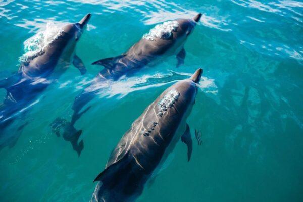 Секс млекопитающие морские
