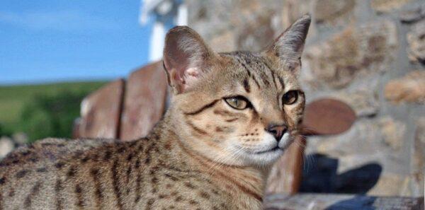 красивые кошки в египте фото согласитесь это
